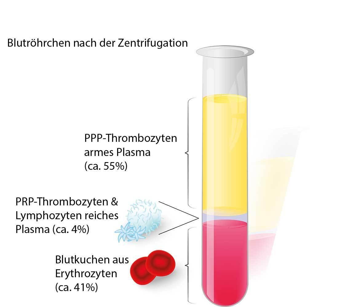 Blutbestandteile im Röhrchen